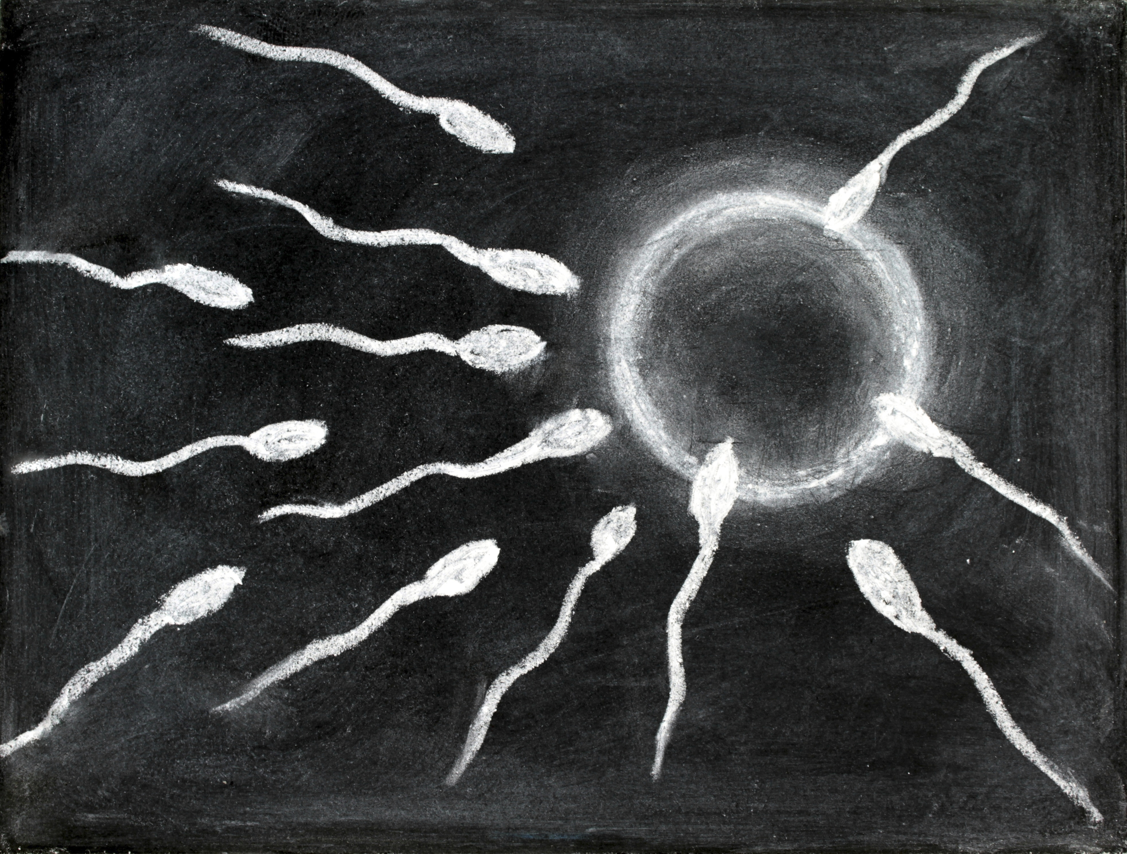 Fertilization of sperm and egg drawing with chalk on blackboard